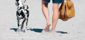 beachwalk900x378