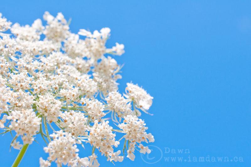 flowerinthesky