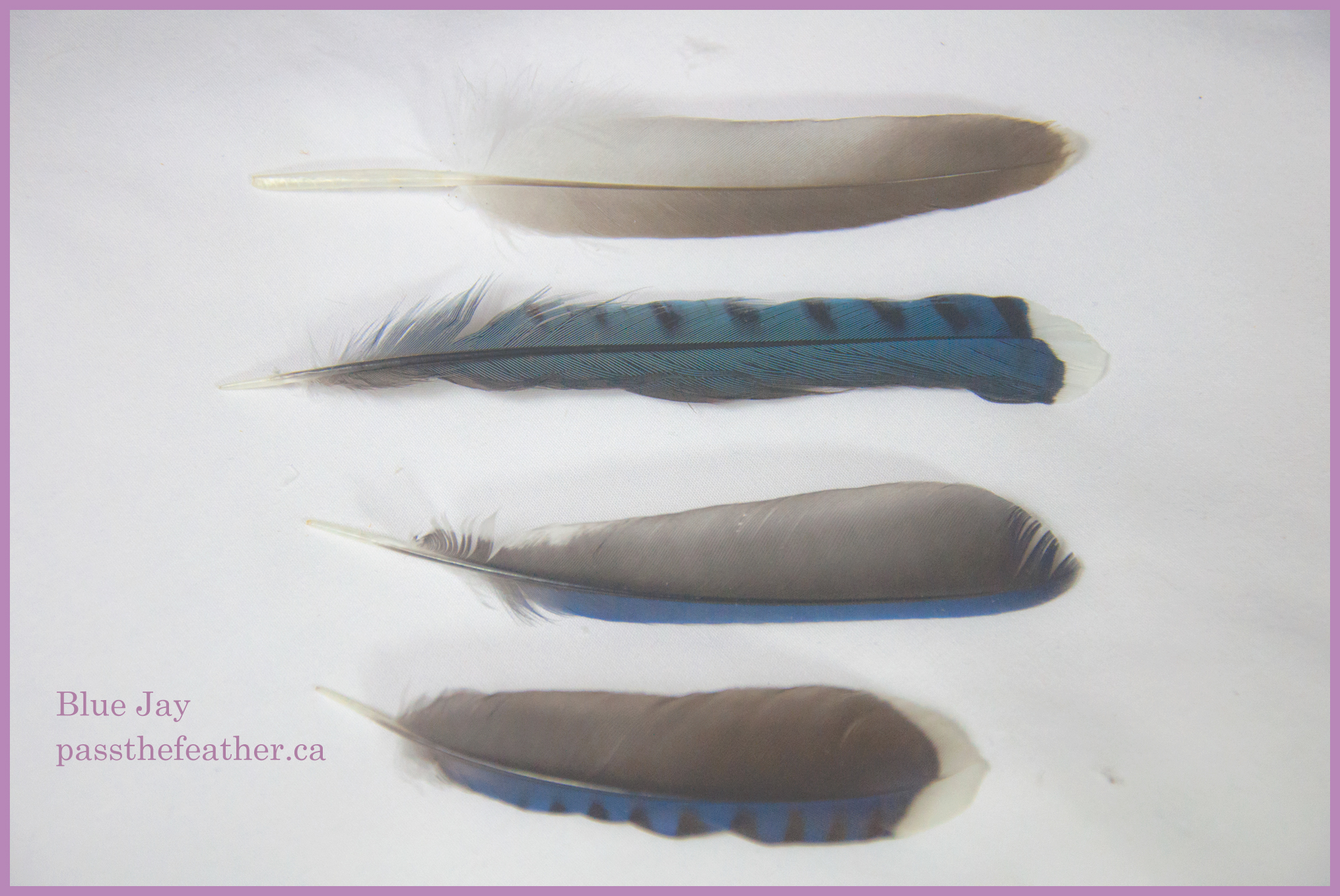 788eac50f584 feathers – Pass The Feather