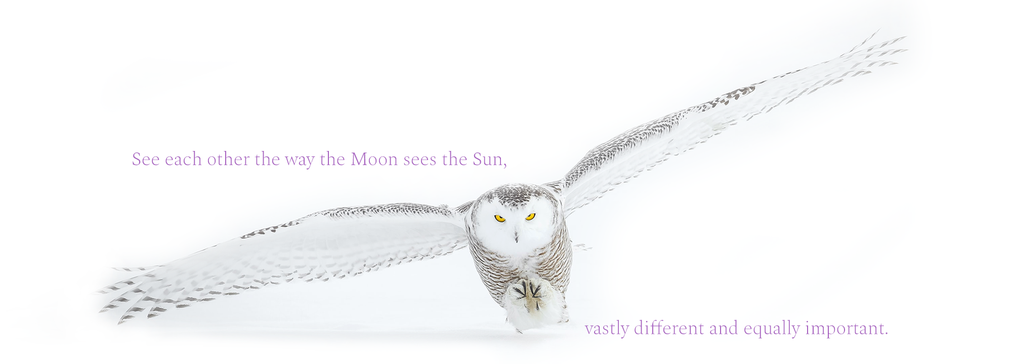snow-owl-website